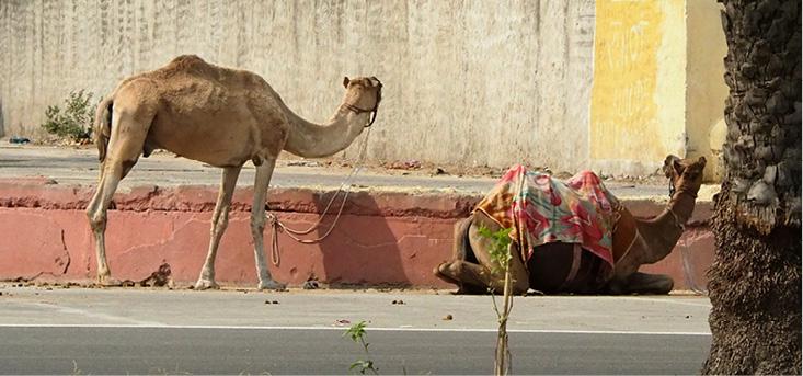 1-16 Wanderlust_India EDITED_web2