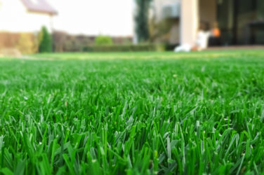 7 tips for a great lawn