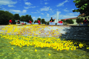 Rockwall Rubber Duck Regatta