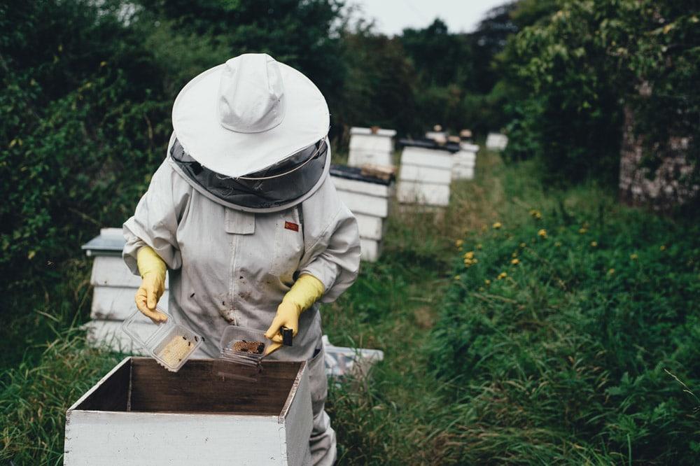 Becoming a Beekeeper how to become a beekeeper beekeeper tales DIY