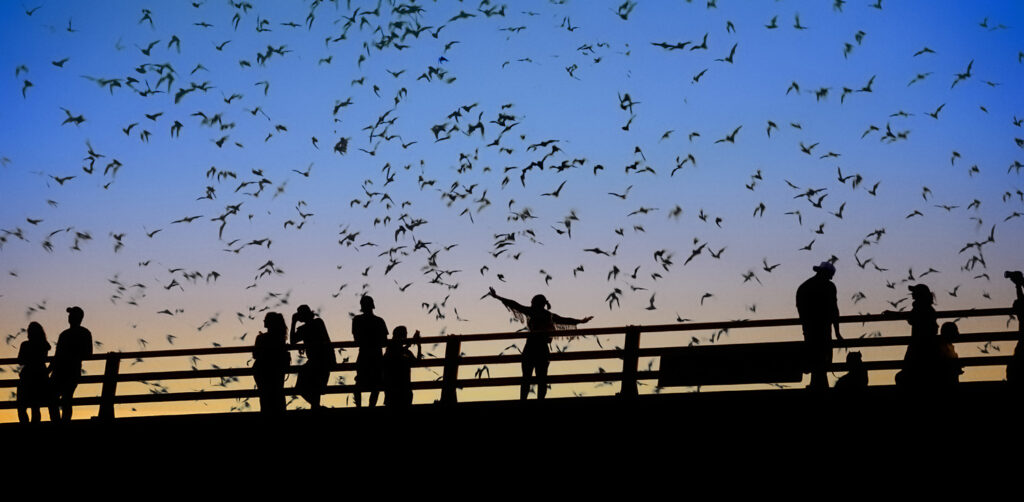 places to see bats in texas