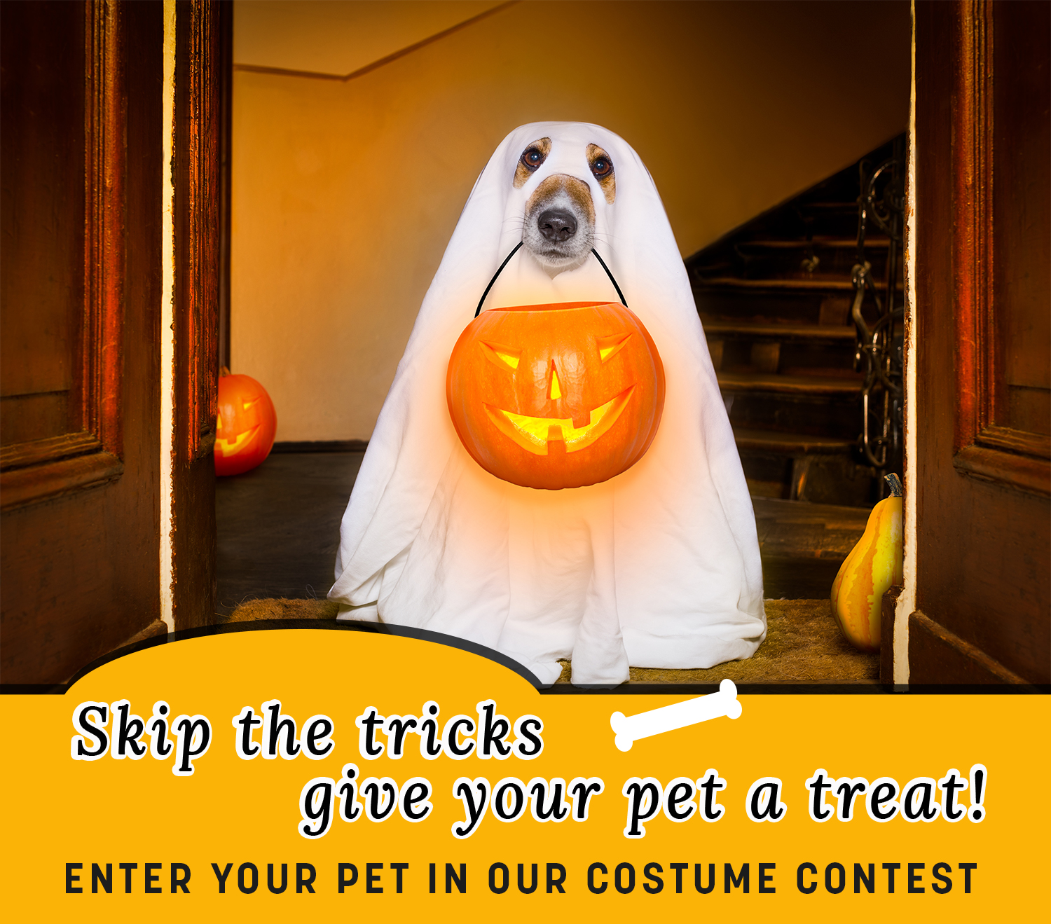 Living Magazine Pet Costume Contest