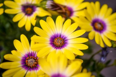 add pops of color to your garden this spring